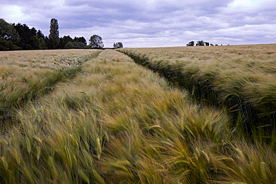 Monoculture - p897m1083233 by MICK