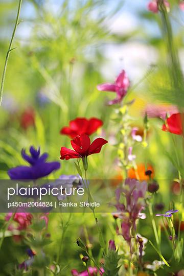Blumenmeer     - p450m2004824 von Hanka Steidle