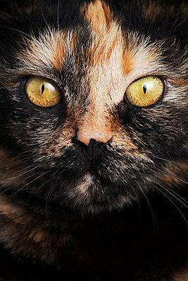 Rot gefleckte Katze - p1097m865995 von Mélanie Bahuon