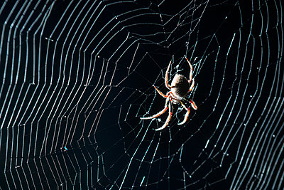 Close-up of spider weaving web in forest at Everglades National Park during night - p1166m2025628 by Cavan Images