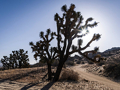 Joshua Tree National Park - p1232m1041181 by Moritz Schmid