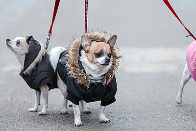 The thoughtful dog - p1245m1148711 by Catherine Minala
