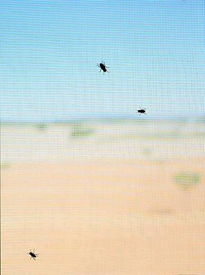 Mückennetz - p1294m1201530 von Sabine Bungert