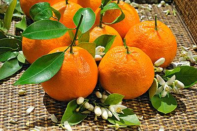 Orange harvest - p8850119 by Oliver Brenneisen