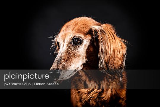 p713m2122305 by Florian Kresse