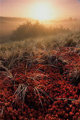 Landscape, Sunrise in Bodega Dunes, Bodega Bay, California - p343m964669 by Jerry Dodrill