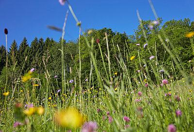 Flower meadow - p888m955452 by Johannes Caspersen