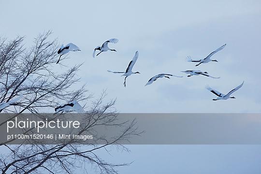 p1100m1520146 von Mint Images