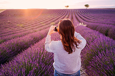 France, Valensole, back view of woman taking photo of lavender field at sunset - p300m2023886 by Gemma Ferrando