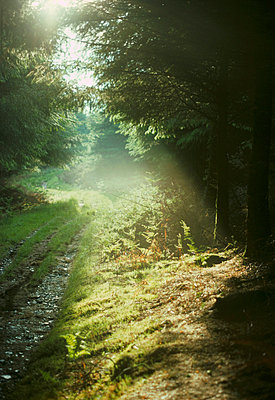 Woodland glade with hazy sunshine - p3490634 by Jan Baldwin