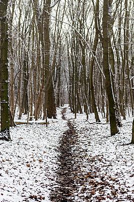 Trail - p739m955620 by Baertels