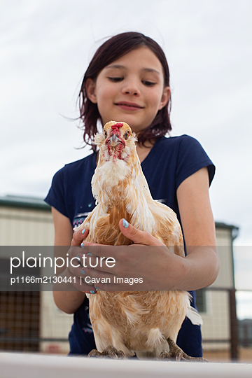 Chicken looking straight into camera being held by girl - p1166m2130441 by Cavan Images