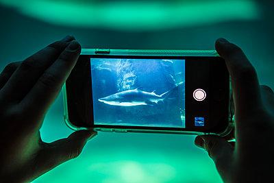 Shark On Phone - p1082m2071324 by Daniel Allan