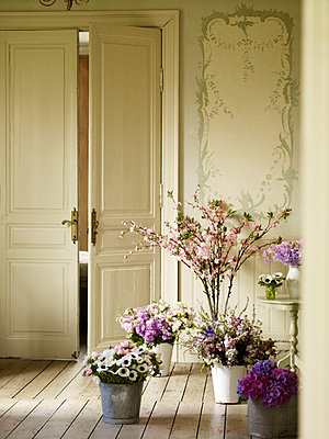 Buckets of cut flowers in room with double doors - p349m2167675 by Polly Wreford