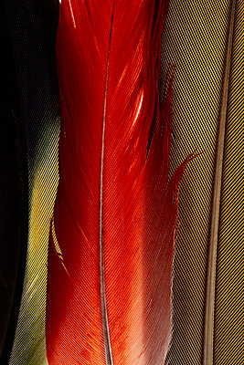 Plumage - p979m910031 by Luther photography