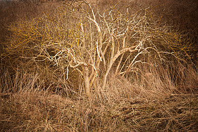 Tree - p1145m956180 by Kerstin Lakeberg