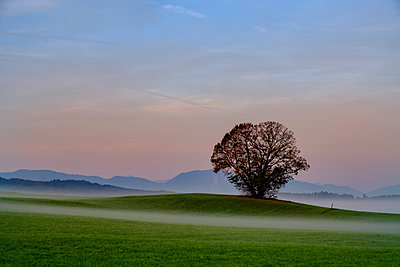 Germany, Pfaffenwinkel, view of landscape with single tree at morning mist - p300m2059380 by Lisa und Wilfried Bahnmüller