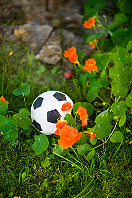 A football by flowering Indian cress Sweden - p31223744f by Ulf Huett Nilsson