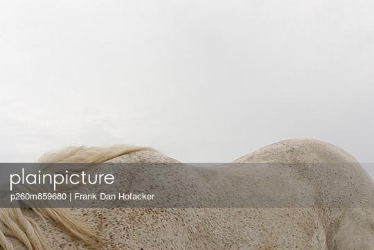 Weißer Pferderücken - p260m859680 von Frank Dan Hofacker