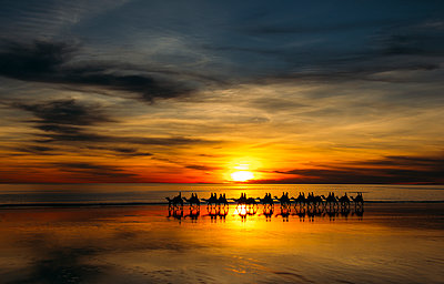 Silhouette of people riding camels at sunset, Broome, Australia - p1023m1157909 by Anna Wiewiora