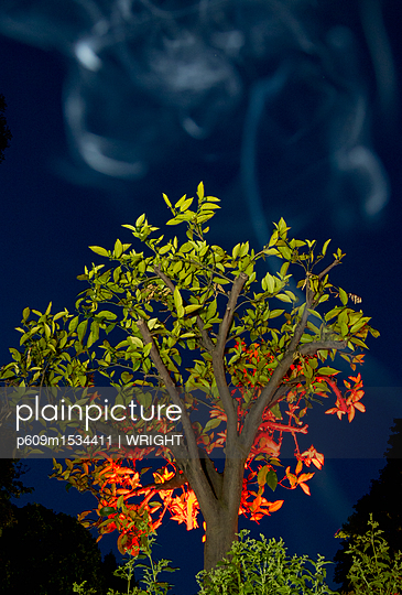 Tree bush burning smoke flames forest fire - p609m1534411 by WRIGHT