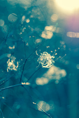 Sunlight through wild flowers - p1228m1527683 by Benjamin Harte