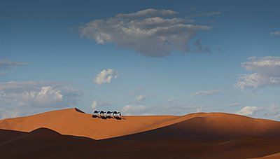 Camel caravan on desert horizon, Dubai, United Arab Emirates - p429m1021789f by Lost Horizon Images