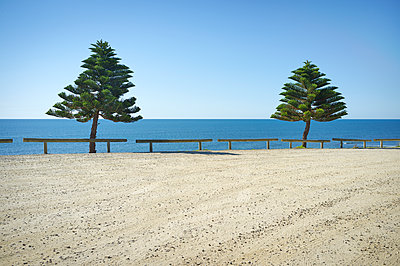 Two pine trees on ocean headland - p1125m2013966 by jonlove