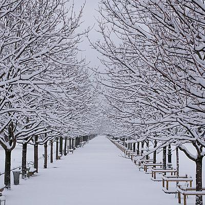 Neuschnee im Jardin des Tuileries  - p1138m1539663 von Stéphanie Foäche