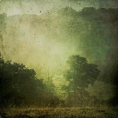 Germany, landscape in morning mist - p300m948903 by Dirk Wüstenhagen