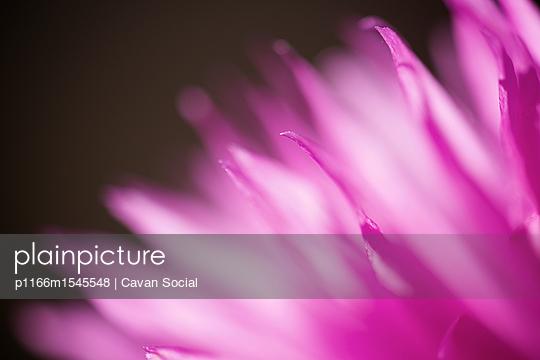 p1166m1545548 von Cavan Social