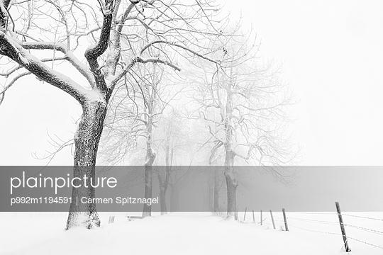 p992m1194591 by Carmen Spitznagel