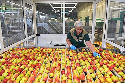 Female worker checking apples on conveyor belt in apple-juice factory - p300m2144124 by lyzs