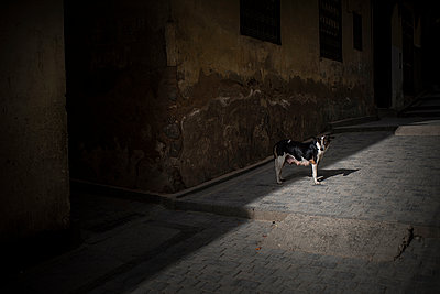 Dog waiting in street - p1007m1216785 by Tilby Vattard