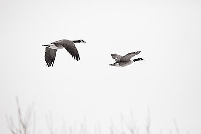 Two birds - p2351212 by KuS