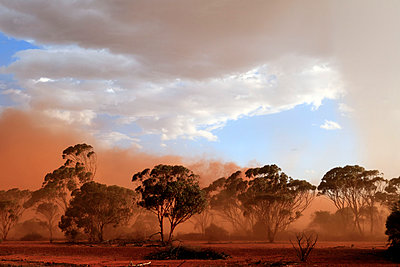 Red dust storm in outback, eucalyptus tree - p979m909952 von Mayall