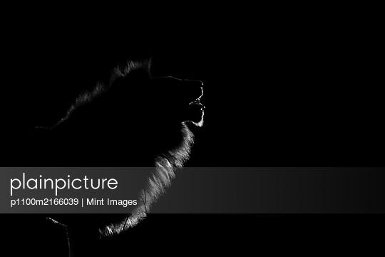 12.06.19 - p1100m2166039 by Mint Images
