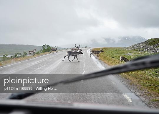Rentiere auf der Straße - p1124m1165598 von Willing-Holtz