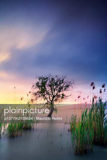 Italy, Umbria, Perugia district, Lake Trasimeno, Scenic view of a tree in the water in the Trasimeno lake at sunset - p1377m2105624 by Maurizio Rellini