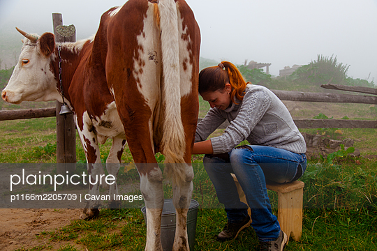 girl at work milking a cow on a farm - p1166m2205709 by Cavan Images