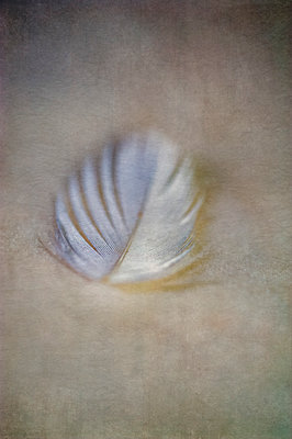 Macro close-up of a white feather on textured background - p1047m2206295 by Sally Mundy