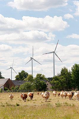 Windpak Calau - p1079m1072950 von Ulrich Mertens