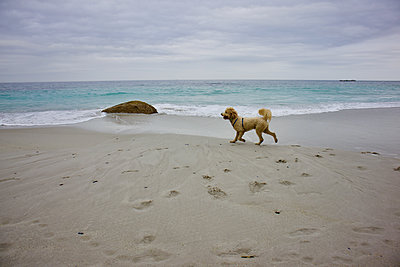 South Africa, Dog on the beach - p1640m2245792 by Holly & John