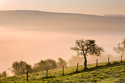 A low blanket of mist is tinged by the colours of sunrise in the valley beneath Cefn Moel, Brecon Beacons National Park, Powys, Wales, United Kingdom, Europe - p8713125 by Adam Burton