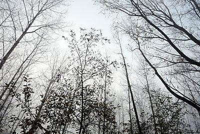 tree - p1105m1093198 by Virginie Plauchut