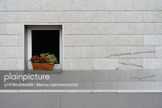 Geraniums at the window - p1578m2284428 by Marcus Hammerschmitt