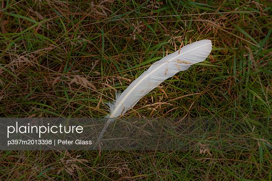 Weiße Feder liegt im hohem Gras - p397m2013398 von Peter Glass