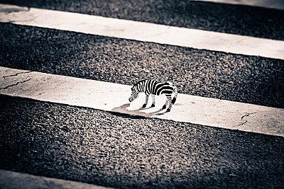 Zebra - p7950159 von Janklein
