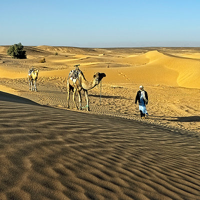 Man leading camels through the desert - p636m2021655 by François-Xavier Prévot