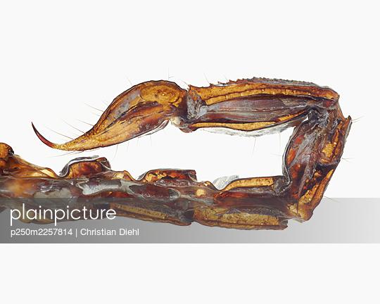 Scorpion - p250m2257814 by Christian Diehl